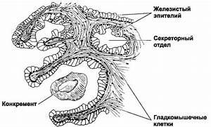 Топинамбур от простатита
