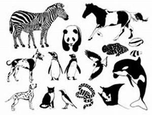 Schwarz Weiß Bilder Tiere : schwarzweiss tiere lizenzfreie stockfotografie bild 7928277 ~ Markanthonyermac.com Haus und Dekorationen