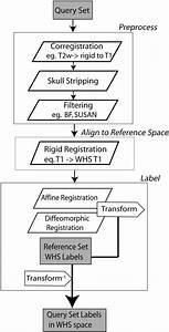 Segmentation Flow Chart For Labeling A Mouse Brain