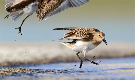 th7d1834 bird canada