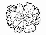 Kale Foodhero Blackline sketch template