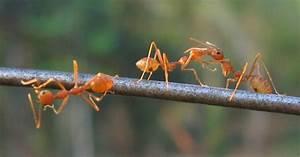 Ameisen Im Garten : diese nat rlichen hausmittel helfen gegen ameisen ~ Frokenaadalensverden.com Haus und Dekorationen