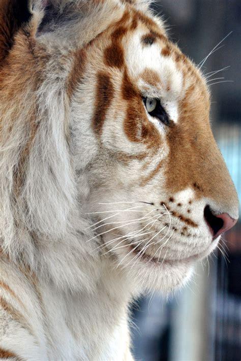 Plasmatics Tiger Day Dreams More Hysazu