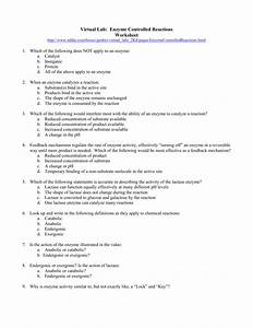 Virtual Lab Enzyme Controlled Reactions Worksheet Answers