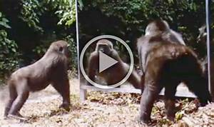 Reflects badly! Wild animals spooked by seeing themselves ...