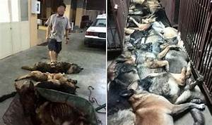 s show dead dogs PILED killed revenge unpaid workers