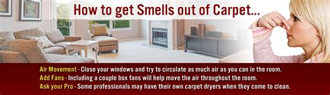 how to get a bad smell out of your room how to get mold smell out of carpet carpet the honoroak