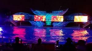 Seaworld San Diego Light Show Light Up The Night Seaworld Orlando Youtube