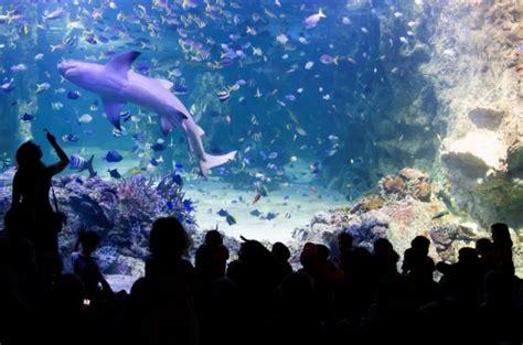 sea sydney aquarium away we go tours