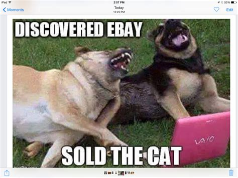 Dog Jokes Meme - sold the cat job well done hahahaha pinterest cat animal and funny animal