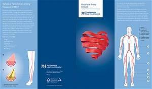 Cardiovascular Brochure Series On Wacom Gallery