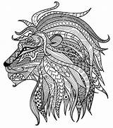 Lion Colour Drawing Coloring Pages Adult Head Getdrawings sketch template