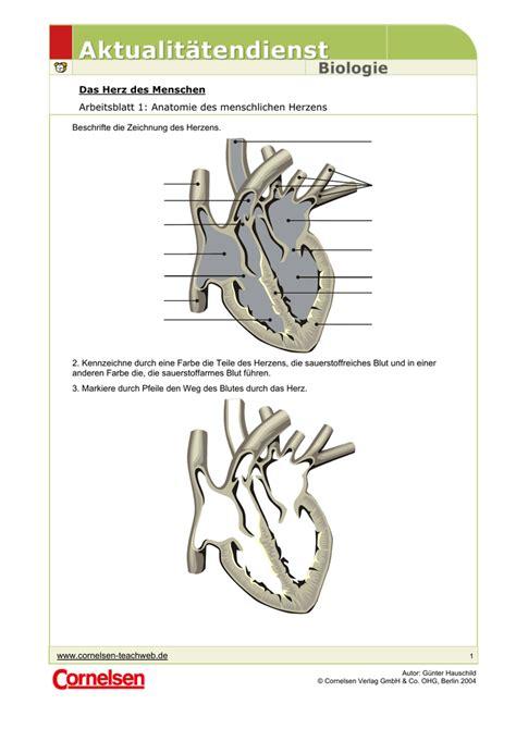 das herz des menschen arbeitsblatt  anatomie des