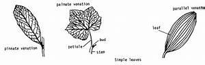 External Leaf Structure