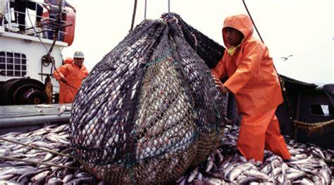 overfishing fish grouper malaysia menus future near won asia author