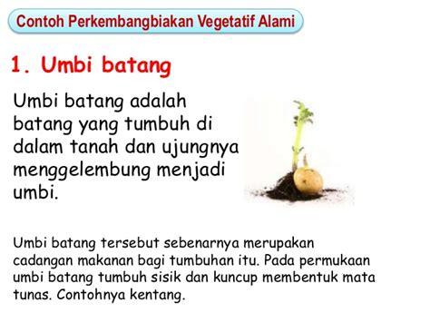 gambar bab perkembangbiakan tumbuhan contoh vegetatif