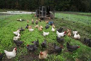 Write in brief about poultry farm management