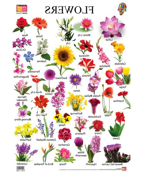 flower names different types flowers pictures names beautiful kolaylink with flower types and names