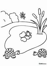 Pond Coloring Worksheets Ausmalbilder Template Heart Clipart Templates Library Clip sketch template