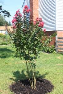How to Propagate Crepe Myrtle Trees