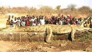 Top 10 Largest And Biggest Crocodile In The World 2017 ...