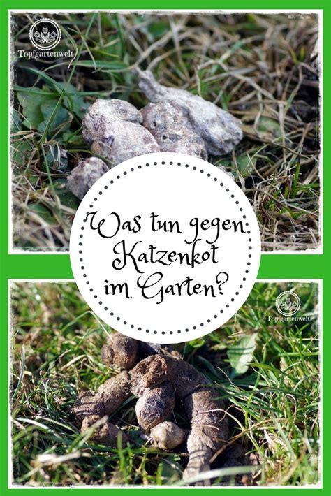 Frühlingsdeko Im Garten by Was Tun Gegen Katzenkot Im Garten Meine Tipps