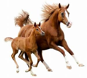 Bilder Von Pferden : pferdekr uter alle kr fte der natur f r ihr pferd ~ Frokenaadalensverden.com Haus und Dekorationen