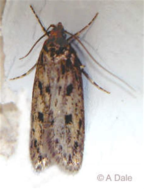Moths In Pantry Where Do They Come From Ot Help I Really Do Need Help My House Has Tiny Moths