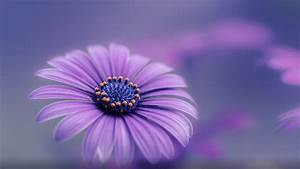 Purple Blue Flower Hd Wallpapers For Mobile Phones And ...