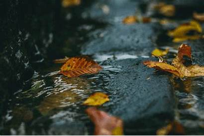 Fall Nature Animated Gifs Spring Winter Summer
