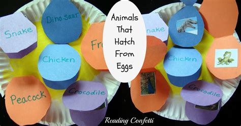 animals that hatch from eggs project reading confetti 384 | animal egg hatch 10
