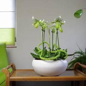 Rempoter Une Orchidee : pot pour orchidee ~ Mglfilm.com Idées de Décoration