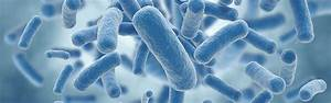 A Two Minute Guide To Microbes
