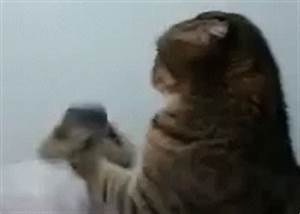 Popular Come At Me Bro GIF - Dog Cat Fight - Discover ...