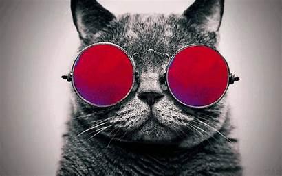 Cat Cool Glasses Galaxy Funny Nature Pixel