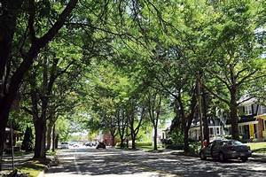 Survey Encourages EGR Residents To Diversify Tree Choices