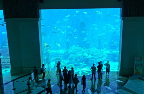 dubai hotel aquarium atlantis luxury dubai travel the aussie nomad