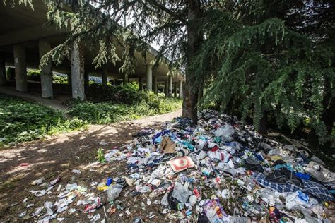 seattle aims  clear   jungle homeless camp
