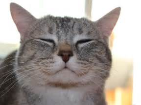 happy cat post the happiest cats who show the best smiles bored panda