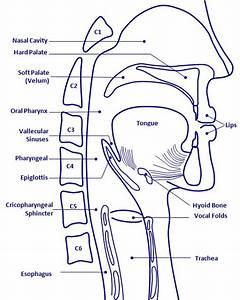 Neurogenic Swallowing Disorders