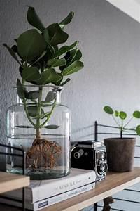 Tulpen Im Glas Ohne Erde : pflanzen ohne erde und wasser ostseesuche com ~ Frokenaadalensverden.com Haus und Dekorationen