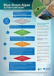 Blue-green Algae Action Flow Chart - 2014