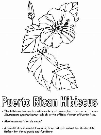 Puerto Rico Coloring Hibiscus Pages Rican Drawing