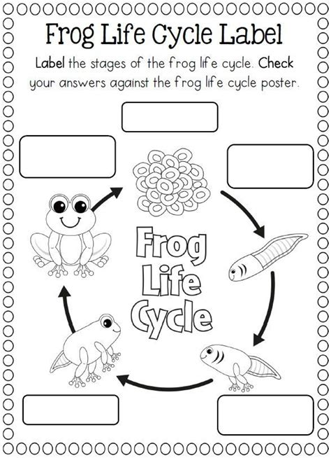 life cycle of a frog coloring page crafts and worksheets