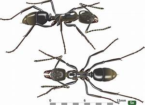 - Ants Of Southern Africa