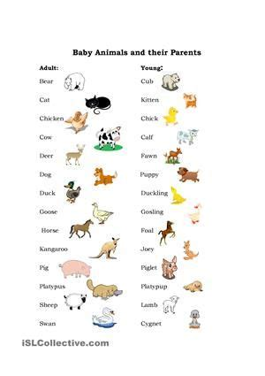 baby animals names worksheet two pages one with a list of animals and their babies