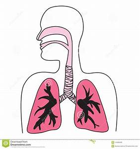 Human Respiratory System Diagram Royalty Free Stock Images