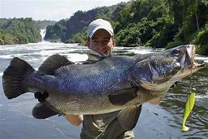 Gorilla Safari & Nile Perch Fishing Trip - Big Game ...