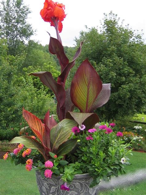 thriller plants  containers hgtv