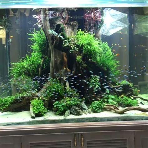 stunning  captivating fish tank aquariums design ideas